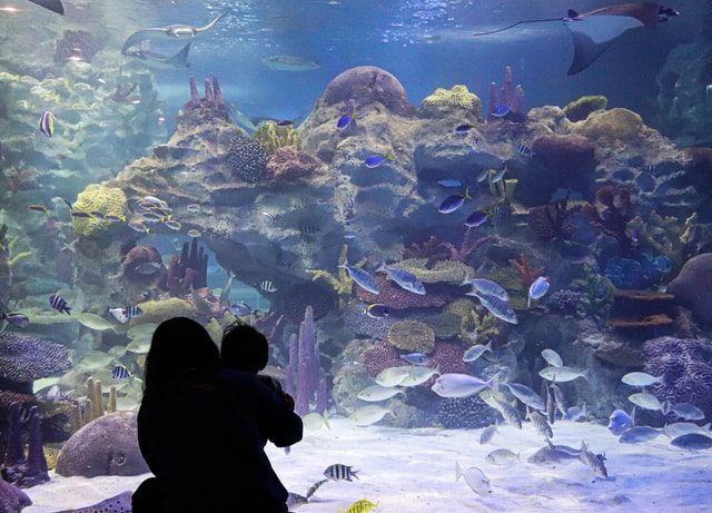 Texas State National Aquarium