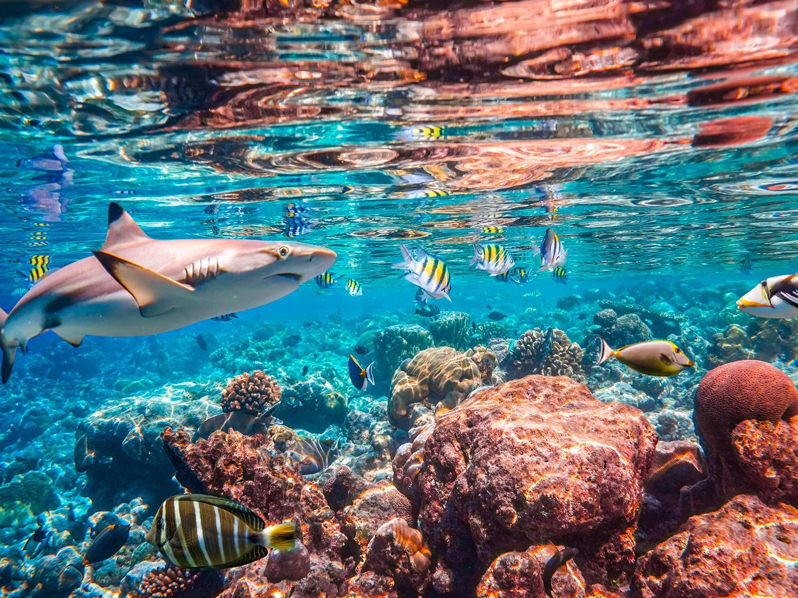 Deep Sea Fishing in Miami, Florida