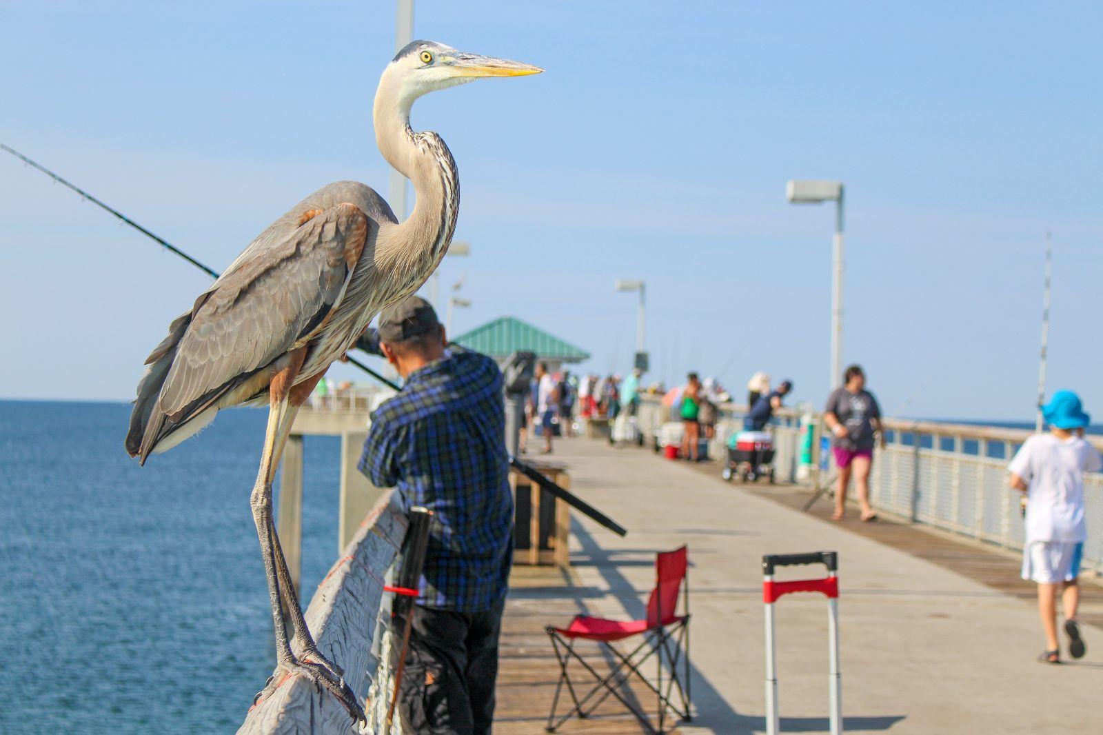 Destin Fishing Pier Florida Fishing