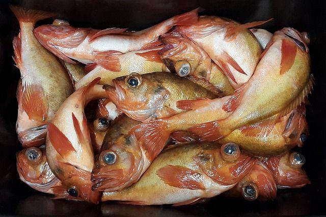 Redfish in Matagorda, TX